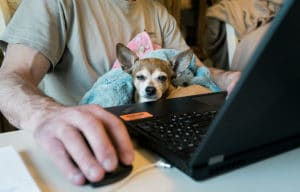 working at home with chihuahua